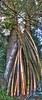 Bambus Ticino