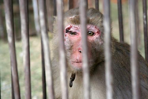 Monkey at a China zoo, 2014