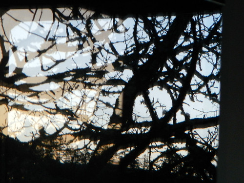 Garry Oak Reflection in Victoria