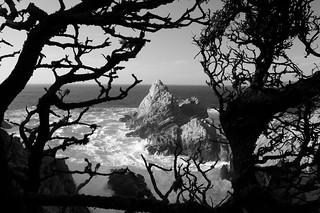 Point Lobos California