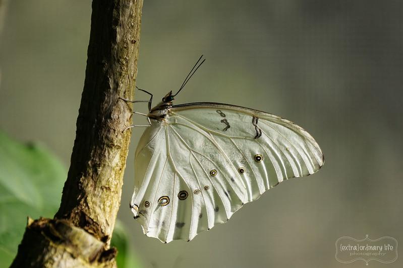 butterflies-2-wm