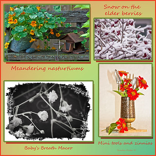 Nasturtiums To Zinnias - Photo Picture Collage