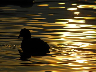 Ultime luci sul lago....