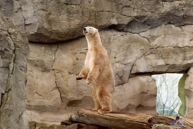 Zoo am Meer 07.03.2015   204