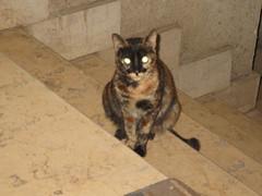 cat 2015-1