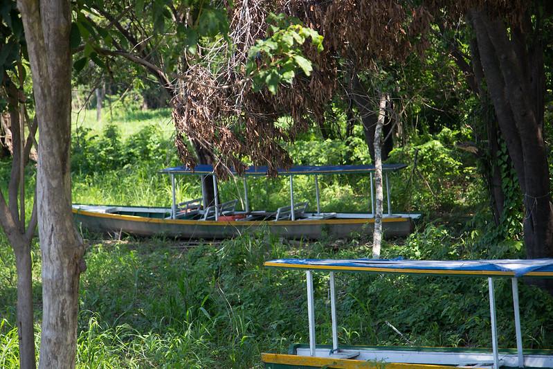 Barcos no meio da floresta