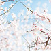 hello spring! by Sonya Khegay