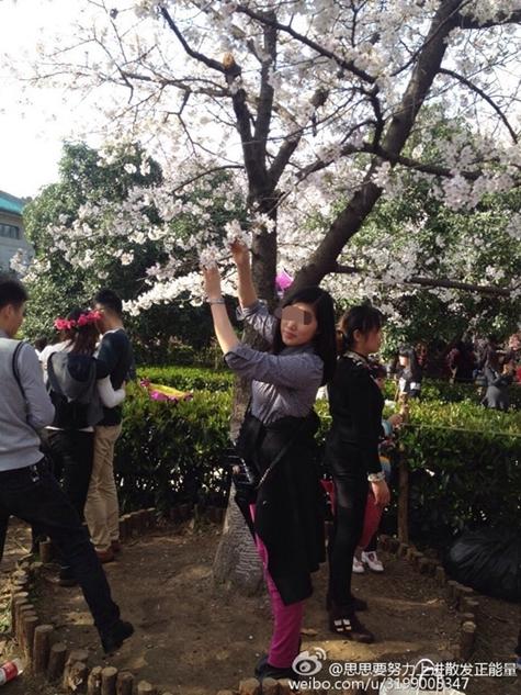 中国人の花見