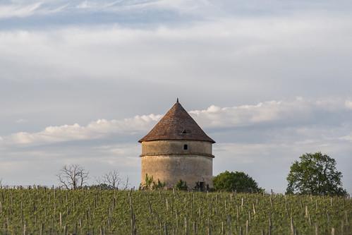 2016/05/06 19h14 vignes, Saint-Félix-de-Foncaude