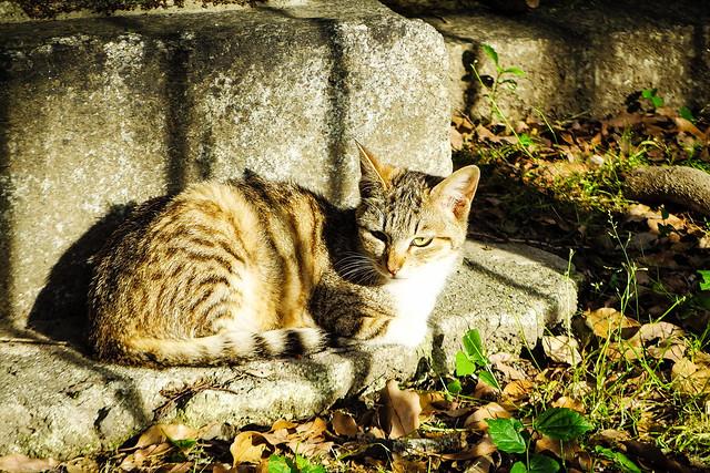 Today's Cat@2016-05-16