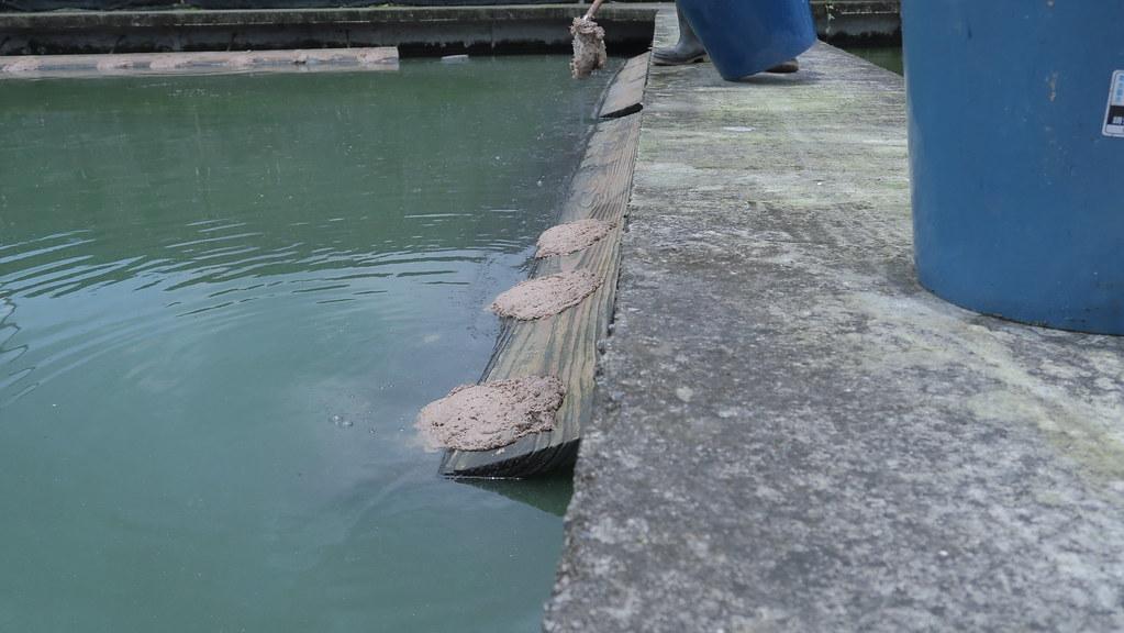 屏東鹽埔樂融融甲魚生態農場 (21)