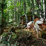 Pigs_01