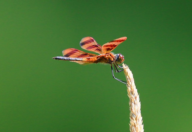 Halloween pennant at Lake Meyer Park IA 854A1790