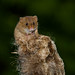 Harvest mouse on Bulrushes 4 of 4 by Alan Wennington