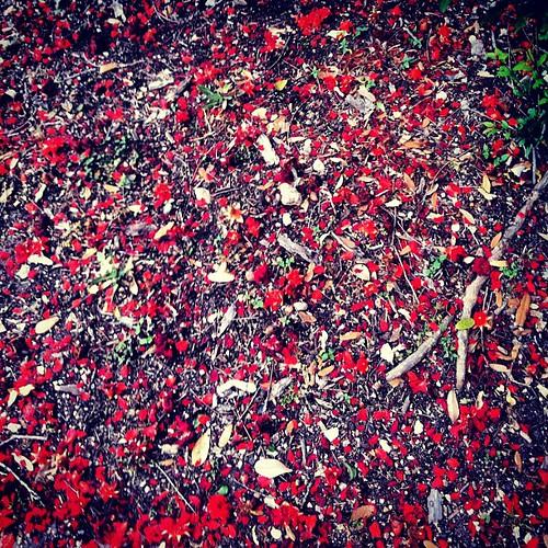 Petals.