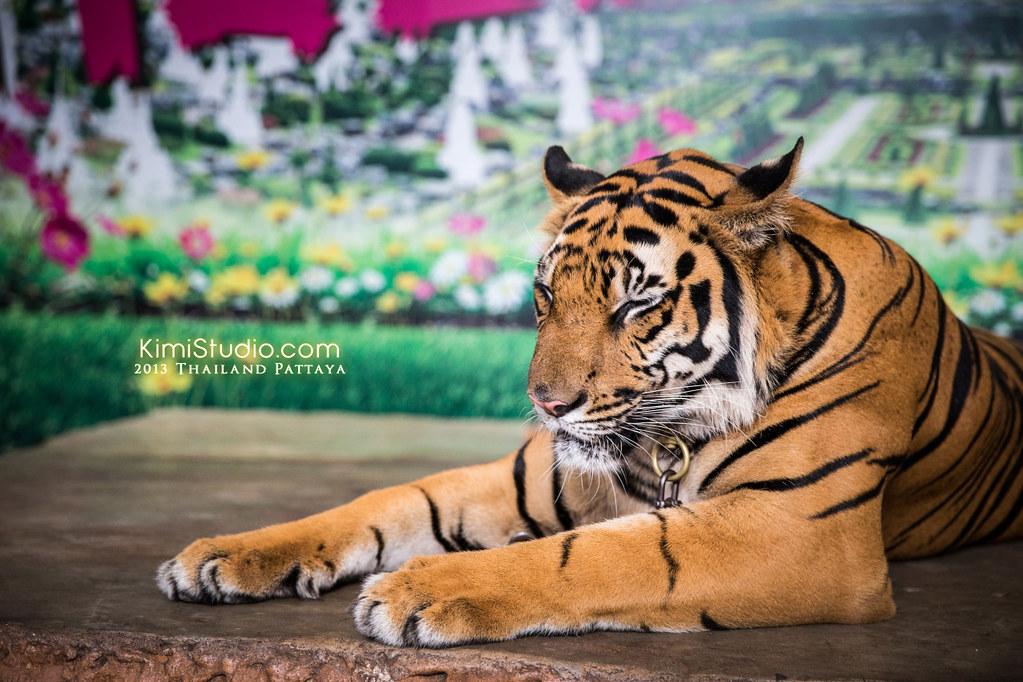 2013.05.01 Thailand Pattaya-048