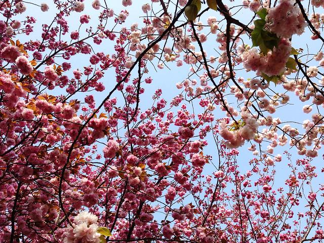 Springtime in Katano