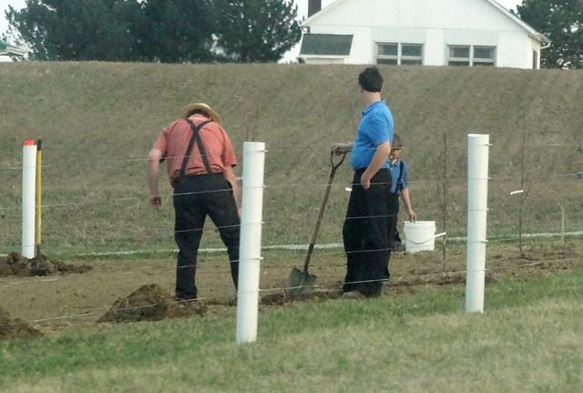 amish-farmers