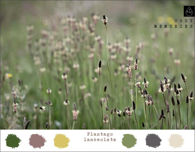 Color Inspiration - Plantago Lanceolata