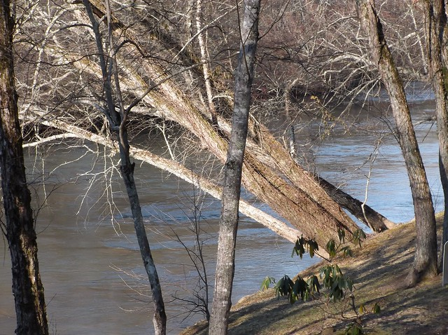 On the Toccoa river bank