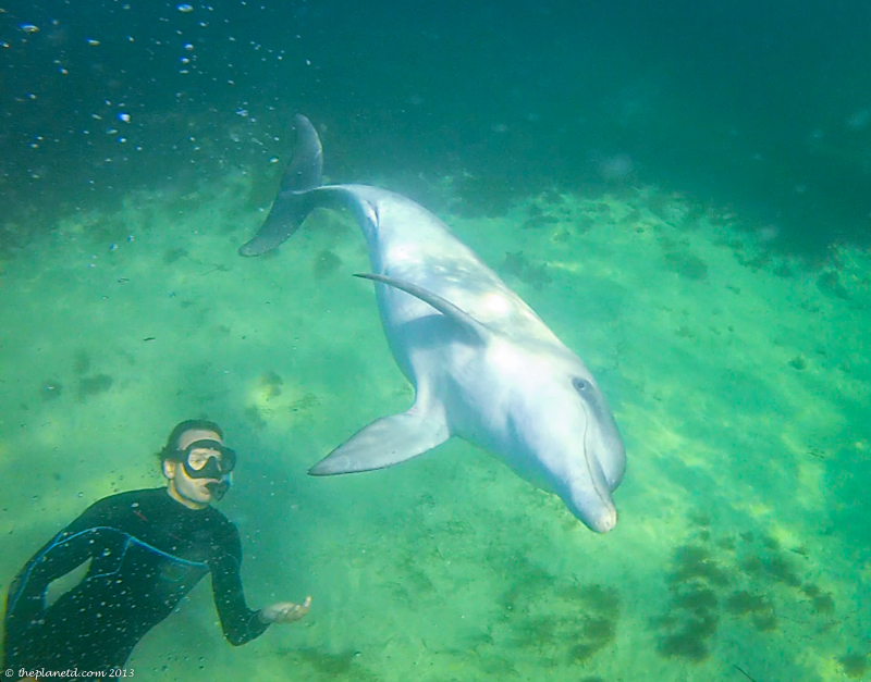 Swimming with the dolphins of Baird Bay.