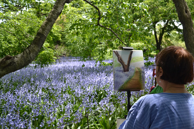 An artist considers her pastel drawing of Bluebell Wood. Photo by Blanca Begert.