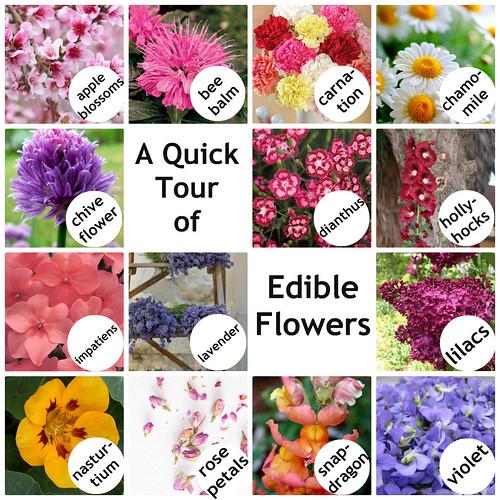 Mrs. Fields Secrets Edible Flowers