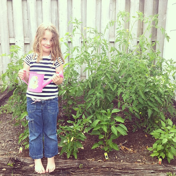 Our Mr. Stripey tomato plant is taller than McKinley! #jonahbonahgarden2013