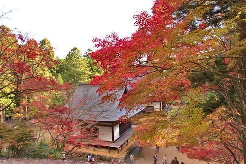 【写真】紅葉 : 神護寺