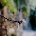 Small photo of Almond bud
