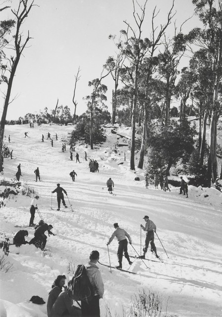 Skiing downhill, Mount Donna Buang Reserve, Victoria, 1947