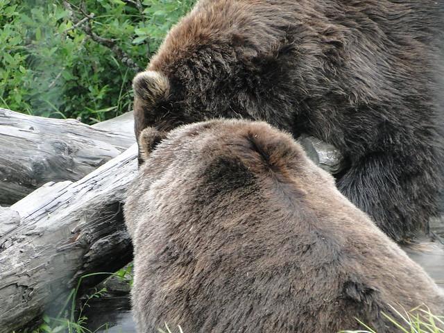Header of Alaska Wildlife Conservation Center