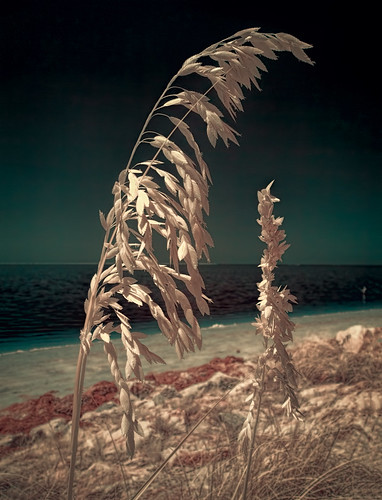 ocean sky usa beach water weather tampa landscape ir florida clear explore shore infrared features tarponsprings falsecolor centralflorida