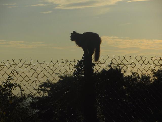 Saissac Cat Moving On