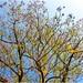 Árbol - Ciudad Fernández SLP México 140402 180953 S4 por Lucy Nieto