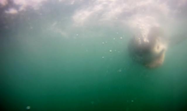 ¡Tiburón blanco a la vista!