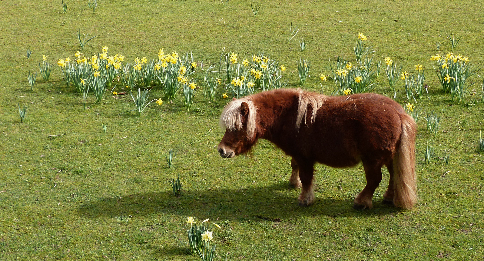 pony and dafs