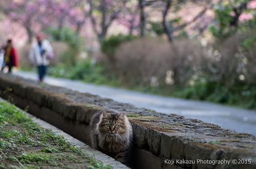 与儀公園 | Naha City, Okinawa 01