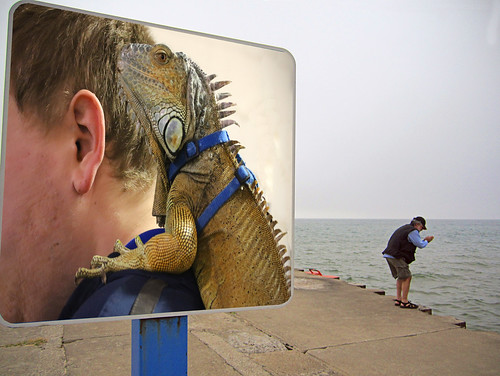 Pet Lizard on a Leash on a Shoulder on a No Swimming Sign