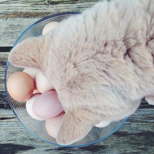 kind eggs 2015