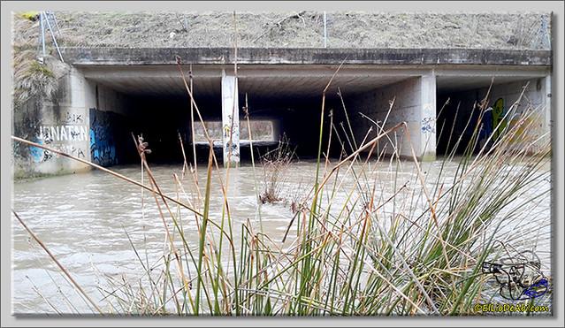 Río Oca a su paso por Briviesca (4)