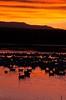 Sunrise on Bosque del Apache-thumb - Copy