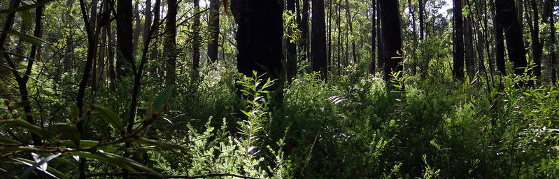 D'Aguilar National Park