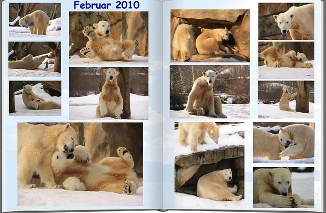 2010_02 Eisbär Knut