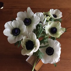 "Anemone. One of my flowers of the week. One of its meanings is ""expectation."" Perfect for the first day of Spring. #flowers #anemone #spring"