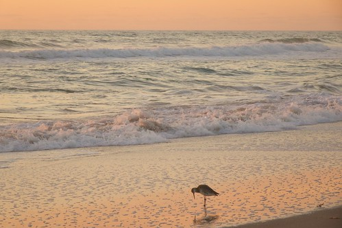 ocean beach sunrise dawn florida indialantic