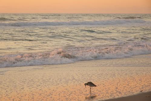 ocean beach sunrise dawn florida indialantic