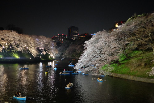 Sakura night moat 01