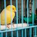 莉莉養的鳥 Lily's Bird / Tainan, Taiwan
