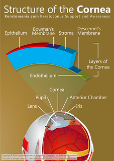 Structure of the Cornea. by Keratomania, eye diagram by Chabacano via Wikimedia Commons.